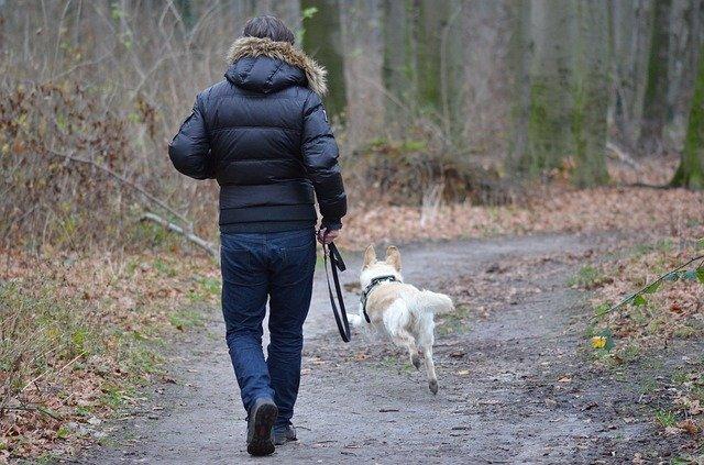 Procházka se psem